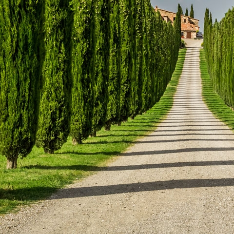 Tuscan Villa Cypress Tree Entrance