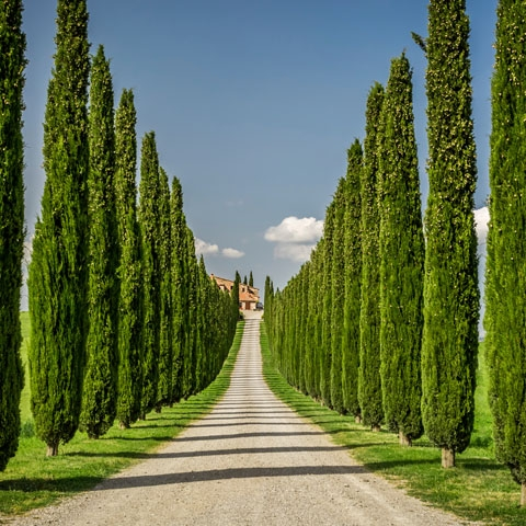 Tuscan Conutryside Villa Cypress Tree Entrance