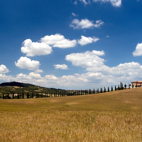 Tuscan Cypress Countryside