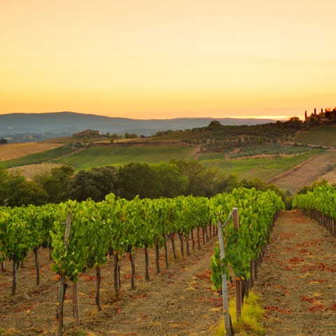 Tuscan Hill Country Vineyard