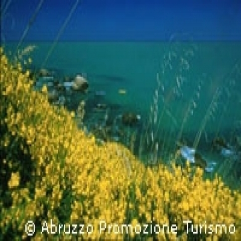 Abruzzo Italy wildflowers on the beach