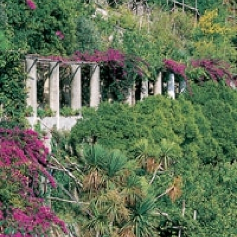 Flourishing plants Amalfi Coast Italy