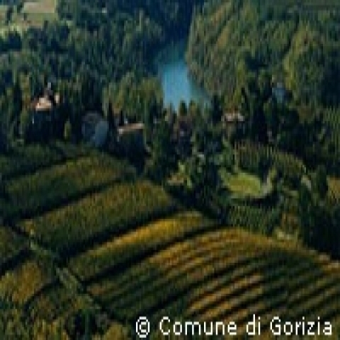 Vineyards near Gorizia Italy