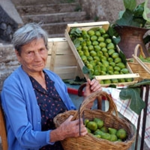 Fig picking season in Lazio Italy