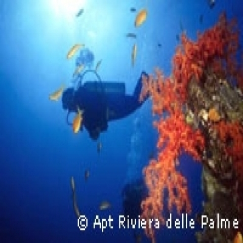 Diving in Liguria Italy