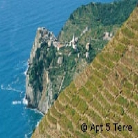 Vineyards in Cinque Terre Italy