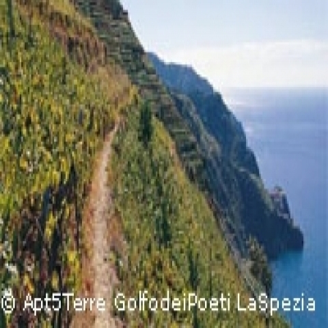 HIking trail in Cinque Terre Italy