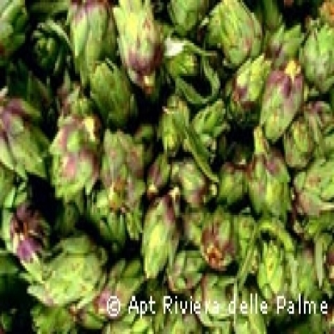 Typical artichockes from Portofino Italy