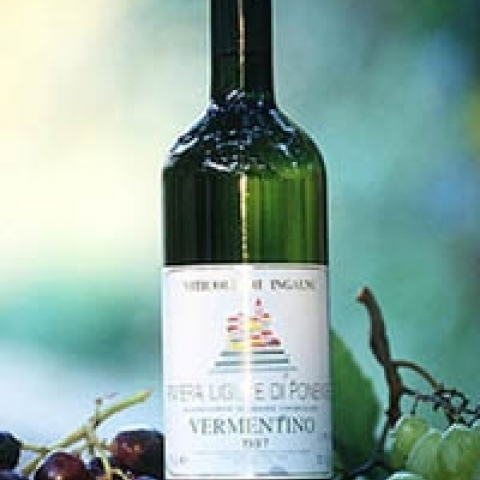 Vermentino wine from Portofino area Italy