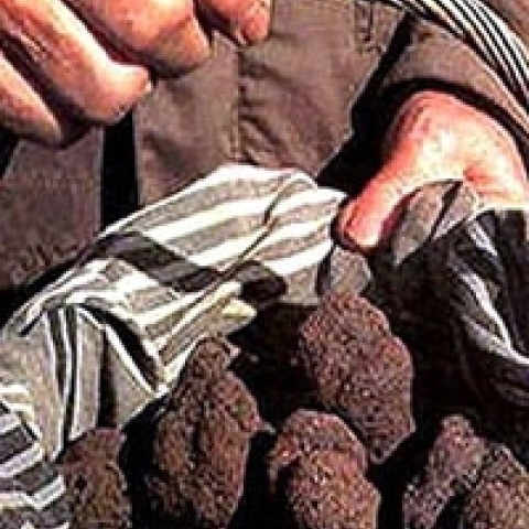 Truffles from Tigullio area close to Rapallo Italy