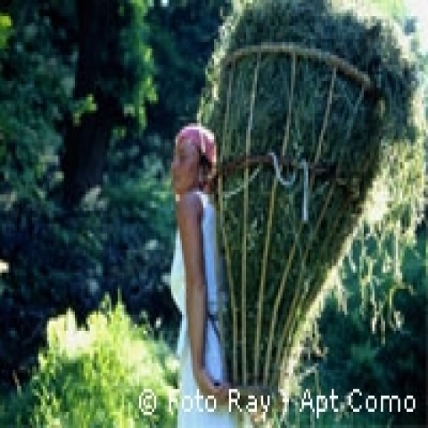 Haymaking around the Lake Como Italy