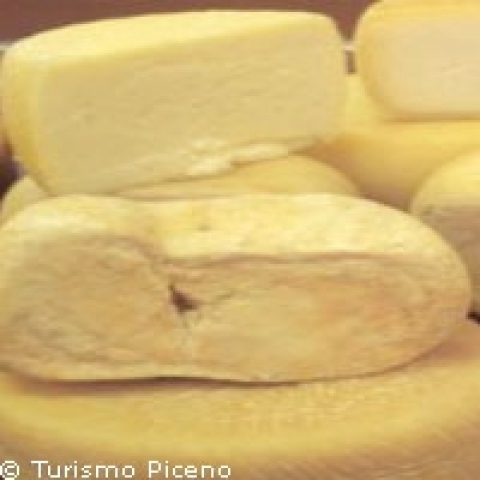 Pecorino cheese from Ascoli Piceno Italy