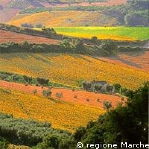 Colors of the countryside around Ascoli Piceno Italy