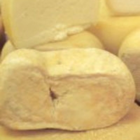 Seasoned Fossa cheese from Urbino Italy