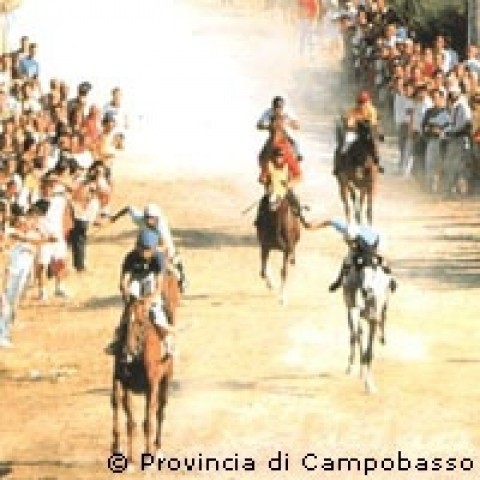 The palio delle Quercigliole in Ripalimosani Molise Italy