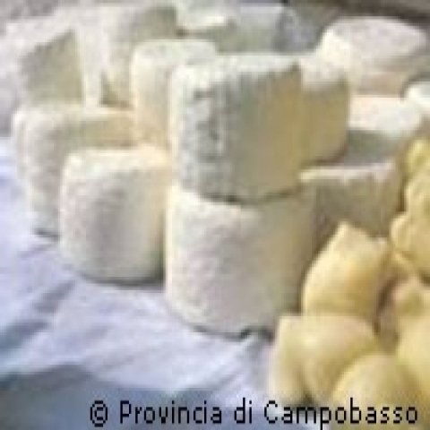 Fresh cheeses Campobasso Italy