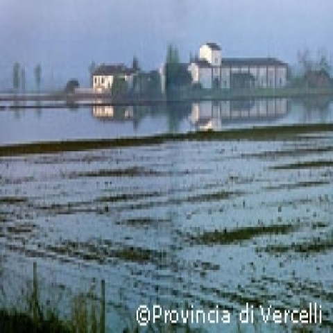 Rice fields in Piedmont Italy