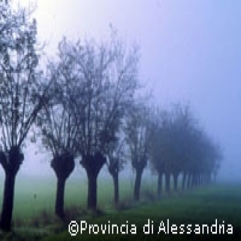 Morning  fog in the countryside Piedmont Italy