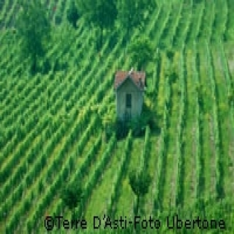 Wineyards around Asti Italy
