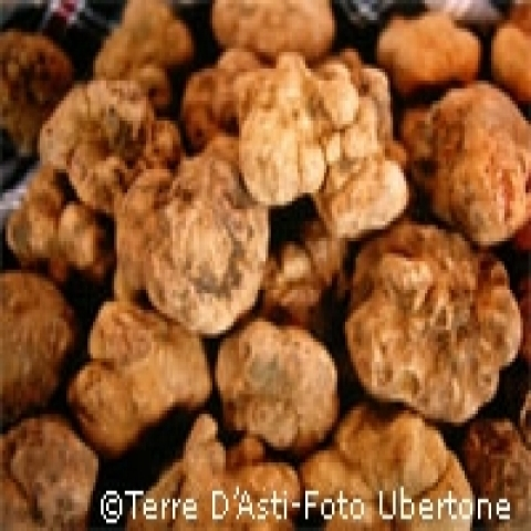 The worldwide famous white truffle from Asti Italy