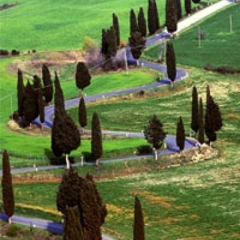 Typical Tuscan countryside with cypresses Tuscany Italy