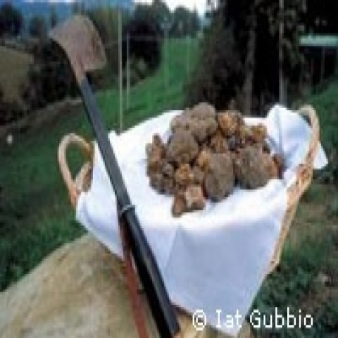 Black truffle from Gubbio Italy