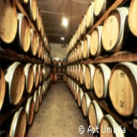 Wine barrels in Spoleto Italy