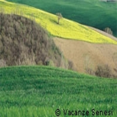 Colors of Siena hills Italy