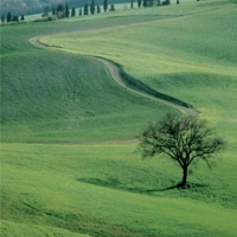 The green of Siena rolling hills Italy