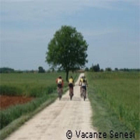 Biking in Siena countryside unpaved roads Italy