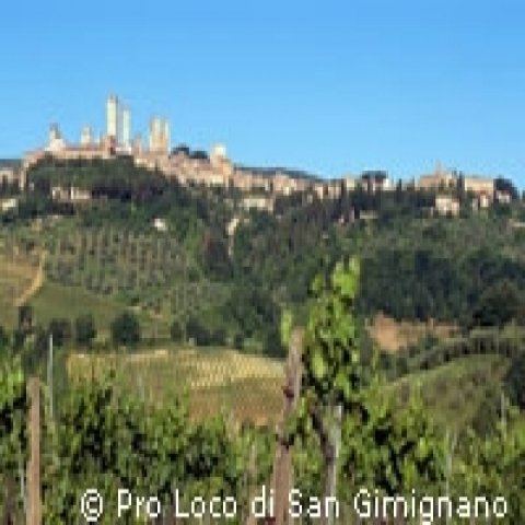 San Gimignano and its vineyards Italy