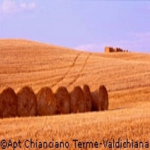 Typical hay-fields near Montepulciano Italy