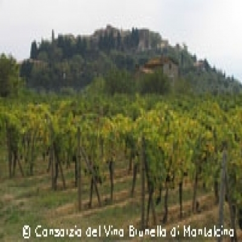 Vineyards in Montalcino countryside Italy