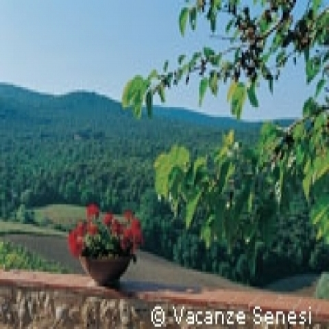 Green scenery in Montalcino Italy