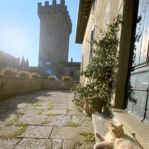 A lovely cat in Poppi Castle Arezzo Italy