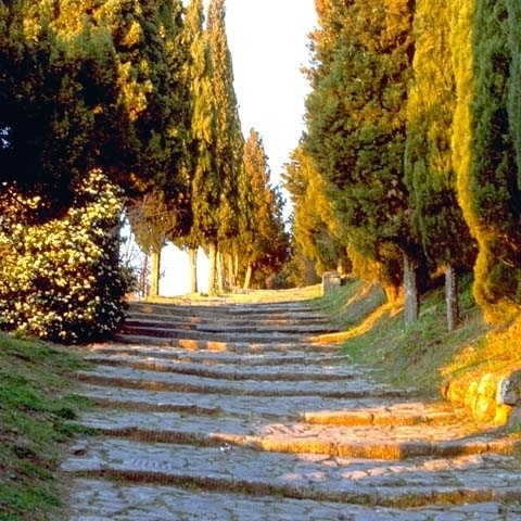 An alley with cypresses near Arezzo Italy
