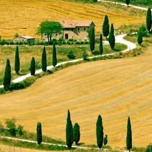 Tuscany Country Side Cypress And Road