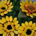 Abruzzo_Sulmona_flowers_made_by_confetti