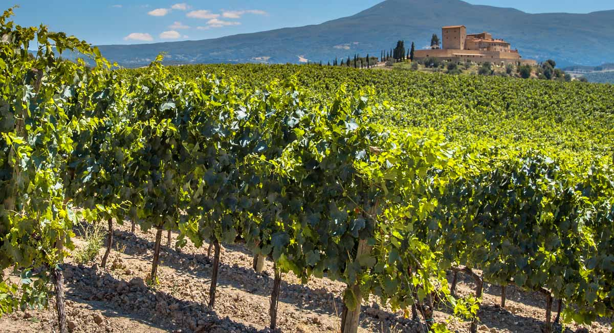 The Chianti Experience With Private Driver 4 Days Customized Trip | Vacation Packages for 2020 – 2021