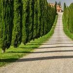 Tuscany Villa and Cypress