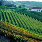 Piedmont_Langhe_Wineyard_Panorama