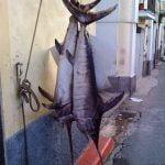 Calabria_Food_Sword_Fish