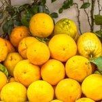 Amalfi Coast Lemon Food Citrus