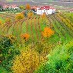 Fiuli Venezia Giulia Collio Wine Region