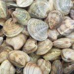 Molise Food Vongole Italian Claims