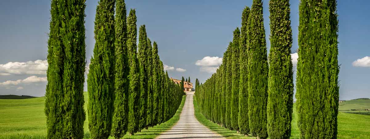 Tuscany Cypress Trees Villa View