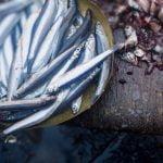 Fresh Fish and Calamary Food Market Agrigento