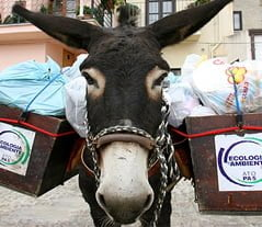 Sicily: When Donkeys Become Garbage Collectors And Help To Save The Environment